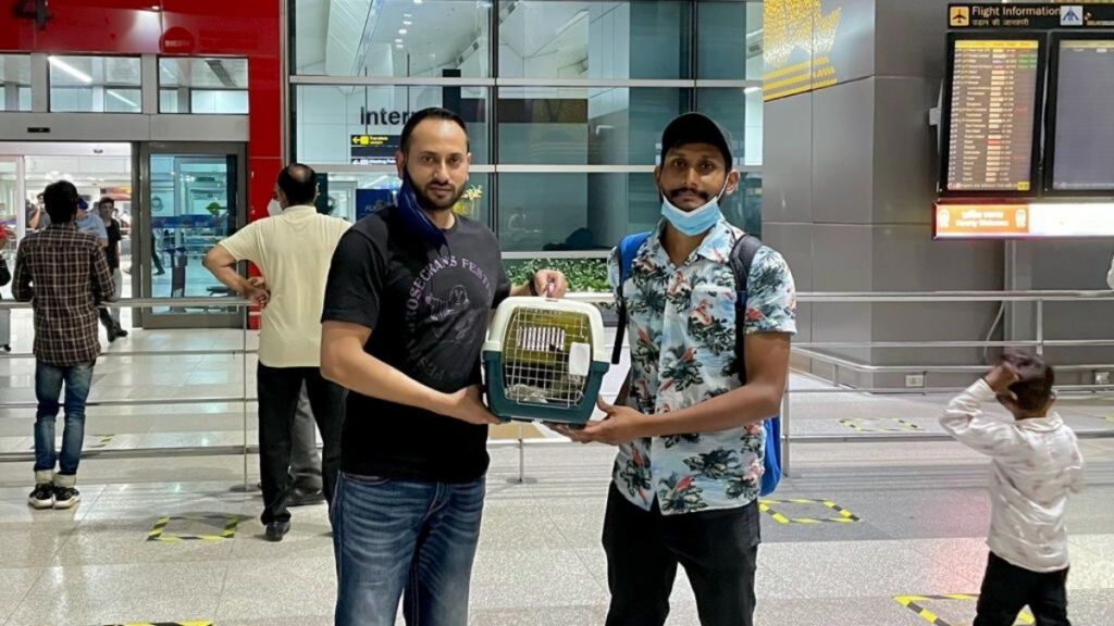 AirPets comes to the rescue of pet owner, saves cat from being deported to Russia